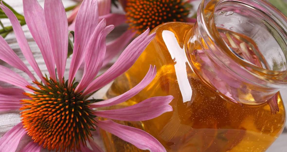 echinacea-and-tincture